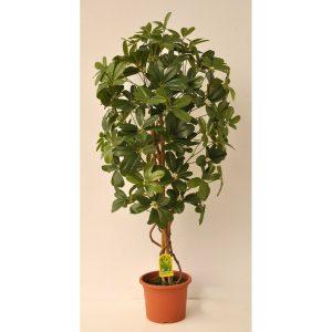Umělý strom Schefflera Exclusive v květináči